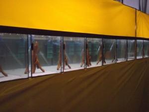Aquariums des discus sauvages