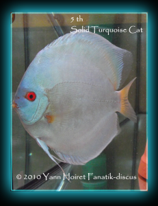 blue diamond discus duisbourg 2010 112