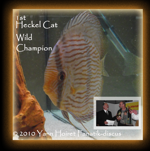 Discus heckel Grand Champion sauvage duisbourg 2010