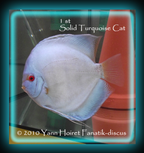 discus solid turquoise duisbourg 2010