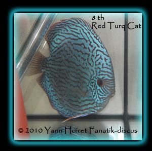 Discus turquoise rouge duisbourg 2010
