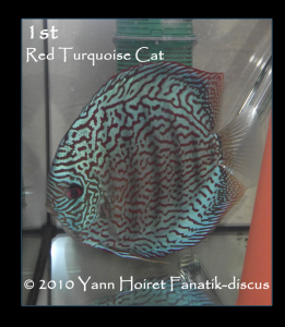 Discus turquoise rouge Ricky Lim duisbourg 2010