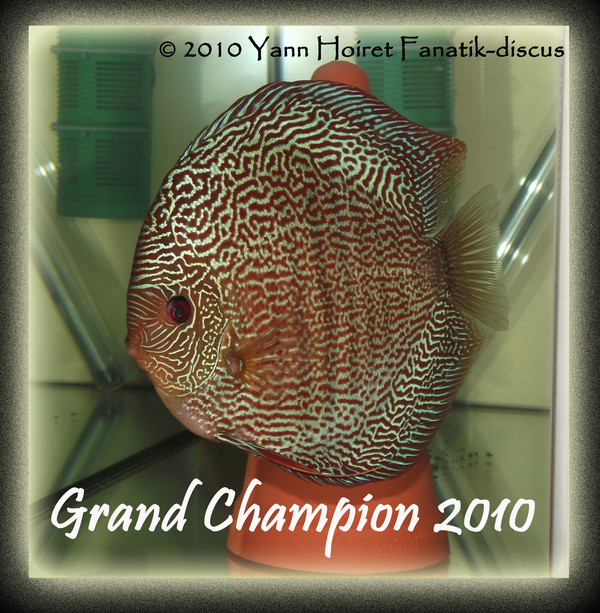 Grand champion snake skin discus ricky lim 283