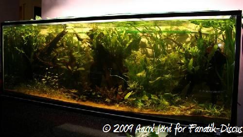 Aquarium prêt à acceullir les discus