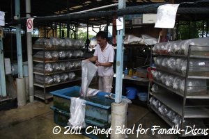 Tropical fish market Singapour