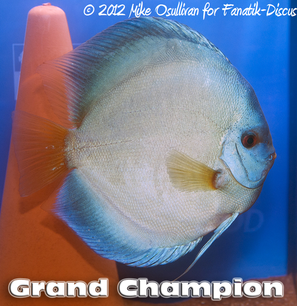 Grand champion discus Blue diamond Dortmund 2012