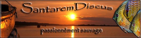 Forum Santarem Discus