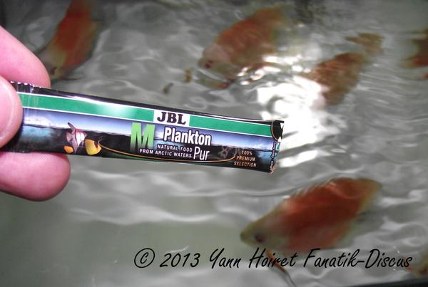 BL Plankton pur pour les discus