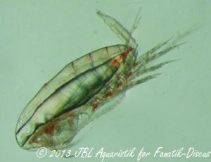 calanus finmarchicus JBL plankton pur