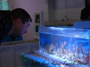 Bourse aux poisson et coraux France discus show 2014