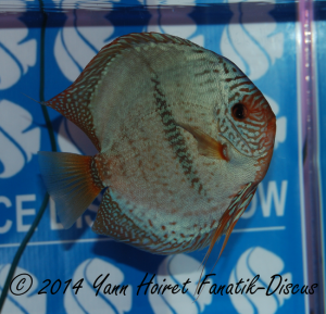 Discus Heckel cross 3th CAT Open France discus show 2014