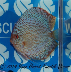 Discus snakeskin 2nd CAT Open France discus show 2014