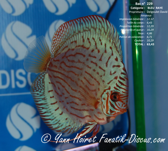 Discus turquoise France Discus Show 2014